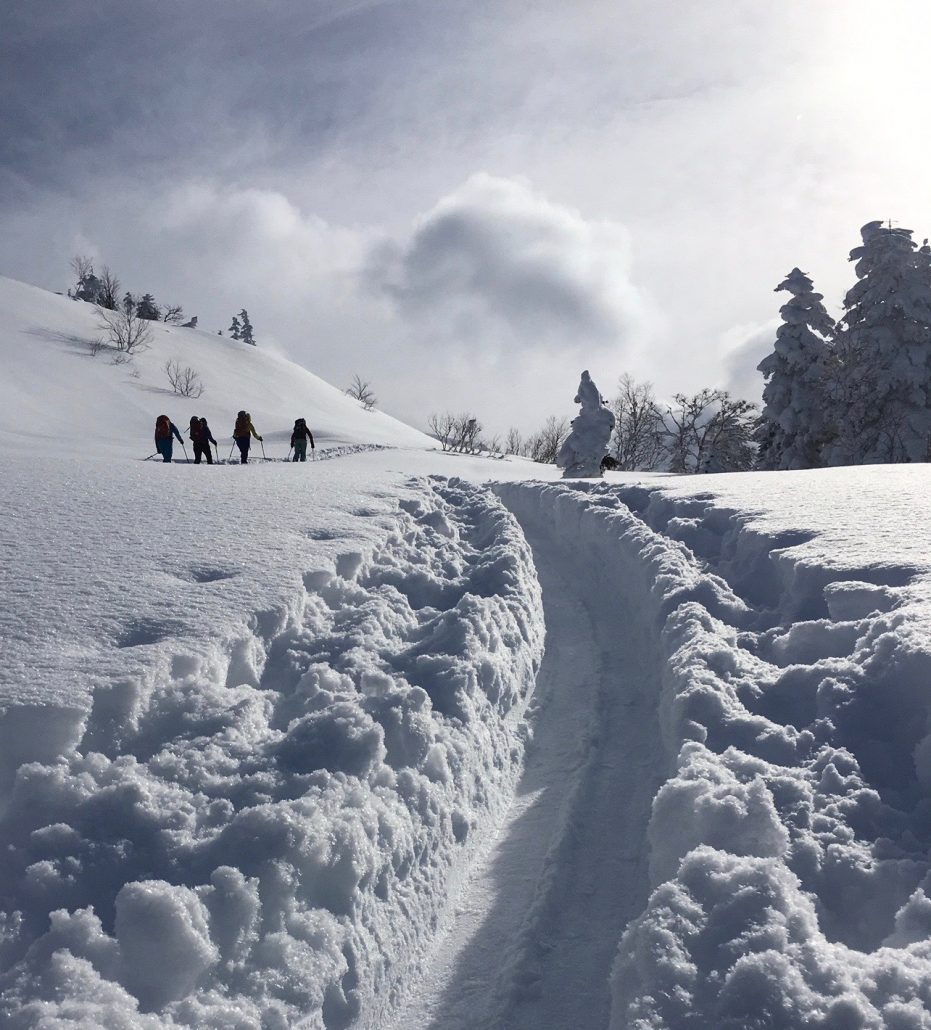 back country skiers follow a skin track